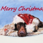 Christmas Cards – Pointer