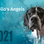 2021 Apollo's Angels Calendar