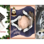 Christmas Cards – Pack of 3 (30 Cards – 10 of each design)
