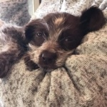 Gizmo – Reserved